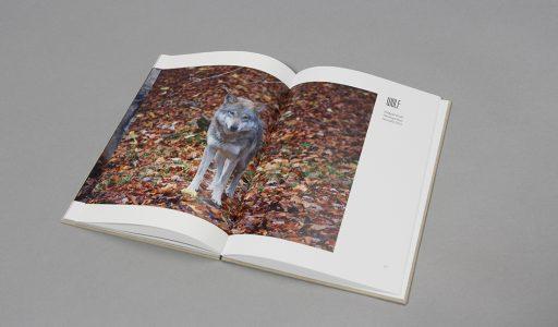 BA-Thesis: »Tiere in Deutschland«, Sina Pommeranz